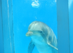 Watching dolphin close up at the Zoomarine in Guia