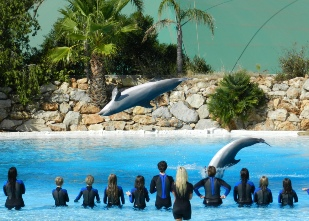 Dolphin show at the Zoomarine in Guia