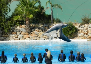Dolphin training at the Zoomarine in Guia