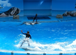 Dolphin stunt shows at the Zoomarine in Guia