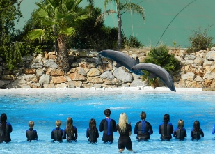 Dolphin show at Zoomarine in Guia
