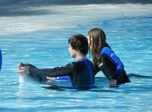 Swim with the Dolphins at the Zoomarine in Guia