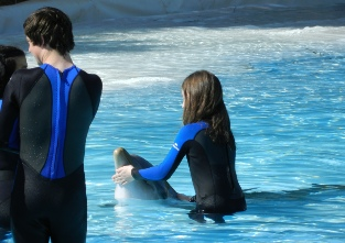 Dolphin Emotions Experience at the Zoomarine in Guia
